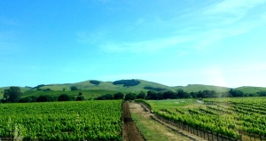 california 393